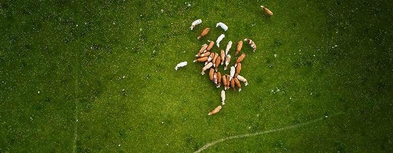 Grabación con drones en agricultura y ganadería